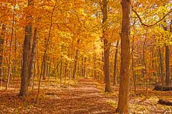 Illinois Park Ranger Requirements