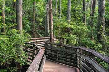 Virginia Park Ranger Requirements