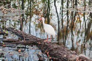 park-ranger-wildlife-ecology